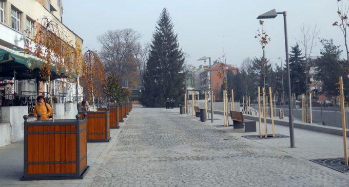 Imagini pentru Râmnicul are brad de Crăciun adus din zona Prislop a Masivului Buila