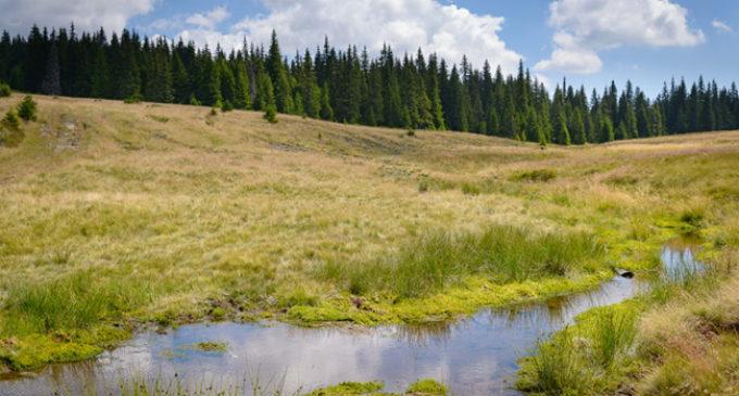 Molhaşurile Căpăţânii, rezervaţia botanică din inima muntelui