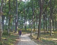 Marşul organizaţiilor pentru salvarea pădurilor