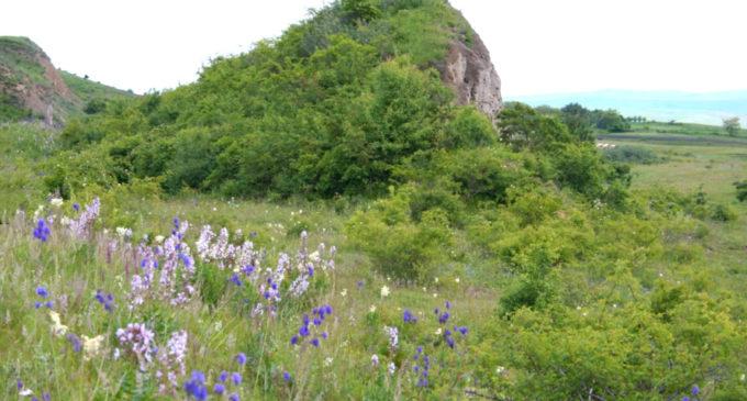 Fânaţele Clujului, una dintre cele mai interesante rezervaţii botanice