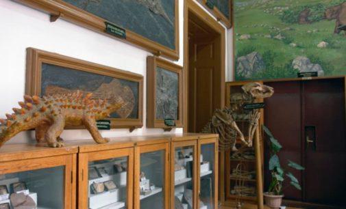 Muzeul de Paleontologie poate fi vizitat gratuit