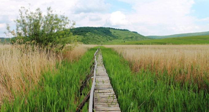 """Rezervaţia naturală mixtă Stufărişurile de la Sic, o mică """"Deltă a Transilvaniei"""""""