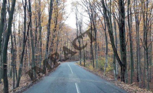 """Drumul care traversează """"Pădurea Pesceana"""", de la Şirineasa şi până la Suteşti, a intrat în linie dreaptă în vederea modernizării"""