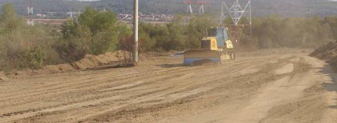 Un gândac dintr-o specie rară blochează acum construcția autostrăzii Sibiu – Pitești