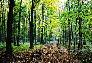 """Romsilva Vâlcea va demara campania de împăduriri """"Luna plantării arborilor"""""""