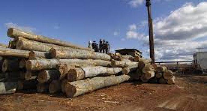 SC Cozia Forest va decide valorificarea de active, clădiri şi terenuri, care sunt în conservare de peste 10 ani
