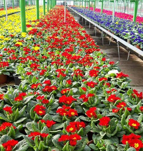 Florile, cea mai vizibilă investiție a primăriei Municipiului Râmnicu Vâlcea