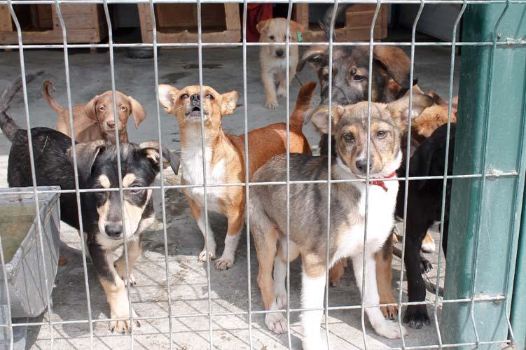 Campanie de adopție a câinilor fără stăpân, organizată de Primăria Băbeni