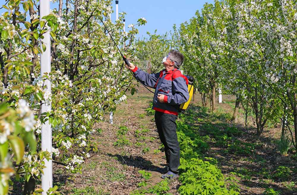 Pomii fructiferi și îngrijirea de sezon