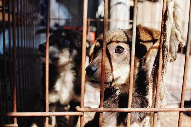 Se deschide Biroul pentru Protecţia Animalelor în judeţul Vâlcea